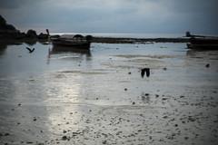 ko lipe, thailand (emiliano facchinelli) Tags: kolipe thailand bird longtailboat