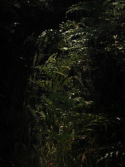 19.1 G faery freeway sm (Dvd2u) Tags: dvd2u loongana mountainview faeryfreeway