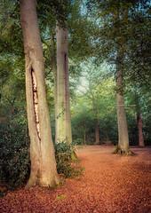 I'll wear green on the red carpet (Ingeborg Ruyken) Tags: 2018 autumn october woods berlicum fall flickr herfst ochtend instagram wamberg forest oktober natuurfotografie 500pxs shertogenbosch morning bos