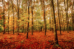 OTXANDIO 1 ART (juan luis olaeta) Tags: forest basoa bosque autumn otoño udazkena paisajes landscape photoshop lihtroom fujifilmxpro1 art oleo