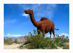 """Guess what day it is?"" (www.halkaphoto.com) Tags: usa westcoast california desert borregosprings anzaborrego statepark sculpture metal camel ricardobreceda artist art geico commercial advertisement"