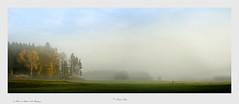 im Moos von Stetten (Tauras Caio) Tags: moor moos stetten berganger hohenthann bayern heimat nebel morgennebel