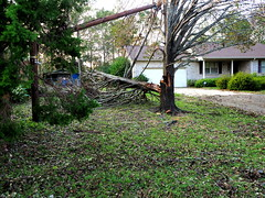 P9200926 (photos-by-sherm) Tags: hurricane florence recovery wilmington nc debris pine trees cuttings chain sawing yards valley fall