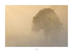 Out of Nowhere (Max Angelsburger) Tags: enz enztal mühlhausenanderenz flusbiegung river bend enzschleife badenwürttemberg mist fog nebel mystisch mystic yellow golden orange herbst autumn colors warm farben 2018 tree valley country dreamy calm dense fiftyshadesofnaturestunningshotsigersmoodadventurethatislifenaturebrilliancekeepitwildnaturesultansmastershotsourplanetdailystayandwander