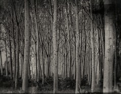 ...seguimi (Rino Alessandrini) Tags: blackandwhite tree nature forest outdoors woodland branch nopeople landscape dark old monochrome backgrounds plant spooky scenics winter treetrunk season atmosphere