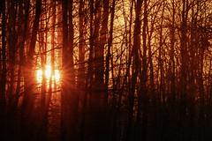 St. Croix State Park Sunset, Minnesota (Tony Webster) Tags: minnesota saintcroixstatepark stcroixstatepark forest statepark sun sunset sunshine trees winter crosbytownship unitedstates us