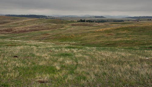 Prairie Grasses on an Overcast Day in Wind Cave National Park