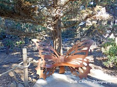 Monarch Butterfly Grove (F R Childers Photography) Tags: monterey california montereycalifornia pacificgrove californiacoast montereycoast nikon nikoncamera