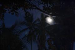 Tropical Moon (McGaggs) Tags: anantara asia honeymoon kohsamui thailand moon trees palms palmtrees night dark sky moonlight dusk black blue tropical