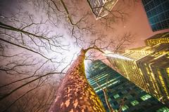 Feel Me Now (Thomas Hawk) Tags: america manhattan nyc newyork newyorkcity usa unitedstates unitedstatesofamerica architecture fav10 fav25 fav50 fav100