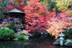I am what is and is not... (LotusMoon Photography) Tags: japanesegarden pond autumn fall magical garden fallcolors colorful trees gazebo peaceful andersonjapanesegarden rockford illinois travel annasheradon lotusmoonphotography impressionist softfocus