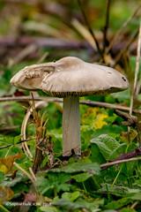 Woodland Fungi (SLHPhotography1990) Tags: 2018 hersey life nature november reserve wild autumn mushroom fungi wood land forest