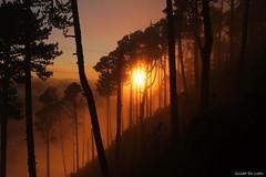 Amaneciendo en Santa Maria... (Guido De León) Tags: volcanesdeguatemala volcansantamaria amanecer bosque