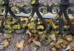 Lichen&Leaves (evisdotter) Tags: lichenleaves lav löv autumn colors iron gate grind macro