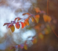 Signs Of The Season (Sue90ca) Tags: canon 6d signsoftheseason leaves ourdailychallenge helios 442
