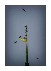 fighting for the best place (Armin Fuchs) Tags: arminfuchs würzburg deutschhauskirche crows flying churchtower windvane wetterfahne blue sky clouds autumn