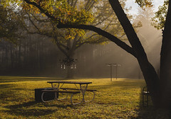 Misty Morning (Thru Mikes Viewfinder) Tags: table sunshine morning rays fog crystal leaves fall autumn light shadow newmexico landscape scenic sunup sunrise picnic bench