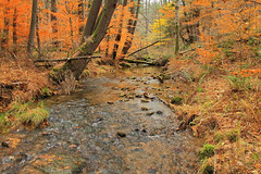 Beaver Run (DavetheHiker) Tags: pennsylvania pa forestcounty alleghenynationalforest anf pennsylvaniawilds pawilds hiking trail northcountrytrail nct trees nature forest outdoors fall autumn foliage color water creek stream brook beaverrun