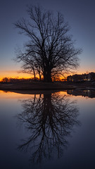 NaturalMirror2 (patphotophactory) Tags: sun dawn sunrise fog sunset sunbeam tree copse moody sky horizon over land lake pond reflection river standing water riverbank jetty pier tourboat flowing punting arch bridge dusk silhouette background beautiful nature