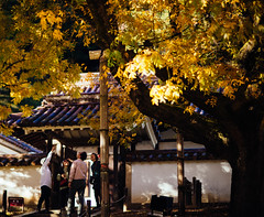 2018.11.5: shizutani school (Nazra Z.) Tags: shizutanigakko shizutanischool 閑谷学校 bizen okayama japan autumn fall 2018 raw vscofilm colours red yellow nature