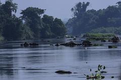 BANDAMA RIVER (Ezio Donati is ) Tags: natura nature panorama landscape foresta forest acqua water fiume river westafrica costadavorio taboitien