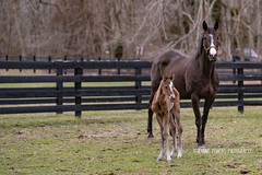 Bodyguard (Funtasian) Tags: horses equestrian equine snow cold field paddock barn filly foal babyanimals colt sky grass