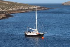 2018-102774 (bubbahop) Tags: 2018 antarcticatrip falklandislands sailboat newisland
