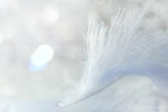 an angel passing through my room (photos4dreams) Tags: whiteonwhite macro mondays macromondays macrolens makro photos4dreams photos4dreamz p4d feather feder justfluffy