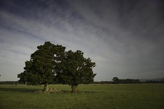 And the two shall become as one (dave.fergy) Tags: sunset trees warm together tree two on1pics clouds summer