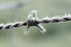 Ca pique ! (Onnalua) Tags: froid cold hiver winter glace neige frost givre ice snow white macro onnalua anna bunichon