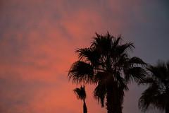 DSC_2286 (Alex Cernichiari) Tags: lasvegas las vegas night nikon nikonz6 fremont fremontstreet neon nightphotography