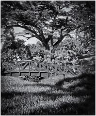 Lomography (Black and White Fine Art) Tags: lomography lomo holga holga120s kodaktmax400 expired2008 expiredfilm jardinbotanico riopiedras botanicalgarden bn bw toycamera camaradejuguete plasticcamera camaraplastica