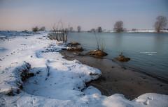 Walking on clouds (Ingeborg Ruyken) Tags: sneeuw 500pxs january riverforeland empel orning januari maasuiterwaarden maas winter instagram natuurfotografie floodplain ochtend flickr snow