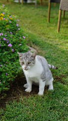 2015-09-20_16-54-30_ILCE-6000_DSC00257 (Miguel Discart (Photos Vrac)) Tags: 105mm 2015 animal animalphotography animals animalsupclose animaux cat cats chat chats colakli e1670mmf4zaoss focallength105mm focallengthin35mmformat105mm holiday hotel ilce6000 iso100 kamelya kamelyaworld nature naturephotography pet sony sonyilce6000 sonyilce6000e1670mmf4zaoss summer turkey turquie vacance vacation