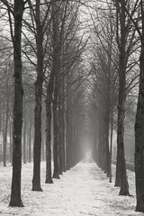 Into the tunnel (RW-V) Tags: canoneos70d canonefs1755mm28isusmlens apeldoorn koninglodewijklaan trees arbres bäume bomen snow neige schnee hiver winter bw nb sw zw noiretblanc monochrome sooc 150faves 175faves 200faves 225faves 250faves 275faves 300faves 325faves 350faves 375faves 400faves 425faves 450faves 475faves 500faves 2500views 525faves 550faves 575faves 600faves 625faves 650faves 675faves 700faves 5000views 725faves