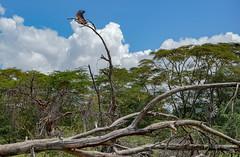 Lake Naivasha, Kenya (Ninara31) Tags: naivasha nationalpark lake nairobi kenya wildlife bird africanbird