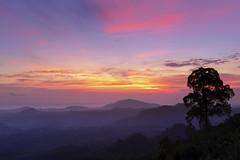 Found new spot for sunset. (Andy @ Pang Ket Vui ( shootx2 )) Tags: landscape golden sunset tree sun tawau the peak platform view fujifilm x100f dusk