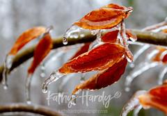 _MG_5928 (Kathy@dornickdesigns) Tags: iliveintheforest ice kathyhardyphotography lifeintheforest myhandmadelife winter2019 icestorm
