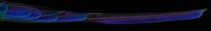 Tail of Violet-tailed Sylph (Aglaiocercus coelestris) male.  Ecuador. (cbrozek21) Tags: tail violettailedsylph aglaiocercuscoelestris male ecuador hummingbird kolibri colibri koliber picaflor feather iridescence color pentaxart