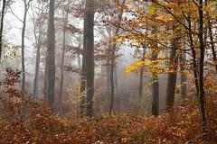 Le temps d'un automne (Excalibur67) Tags: nikon d750 sigma globalvision art 24105f4dgoshsma paysage landscape forest foréts arbres trees autumn automne brume mist nature