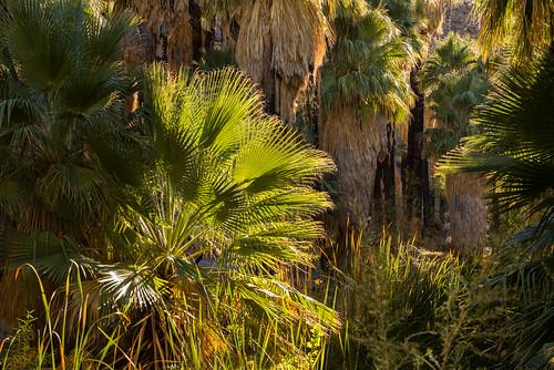 Palm Canyon, California