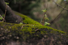 spring 2019 / 8 (peaceblaster9) Tags: plants tree sprouts newgrowth spring nature leica 春 草花 木 散歩 スナップ