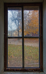 Look Through Any Window (foregorp) Tags: fall clinton newjersey colorful leaves window pane colors glass view nature