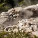 Papakura geyser, Te Puia, NZ