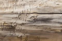 Récit de vie  (life story) (Larch) Tags: bois tronc récitdevie boisflotté gruissan dessin drawing lifestory wood driftwood texture life vie