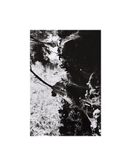 Spiderweb tree (kotmariusz) Tags: tree spiderweb web monochrome blackandwhite monochrom monochromatic monochromatyczny bw nature natura drzewo pajęczyna mononchrom analog polska 35mm filmphotography ilford xp2400 olympusom40