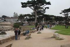 IMG_10945 (mudsharkalex) Tags: california pacificgrove pacificgroveca loverspointpark