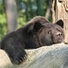 """LiBearty Bear Reservation in Zarnesti, Transylvania (25) • <a style=""""font-size:0.8em;"""" href=""""http://www.flickr.com/photos/131242750@N08/32303334618/"""" target=""""_blank"""">View on Flickr</a>"""