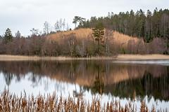 DSC_6739 (stefanh.varberg) Tags: 16mars nösslinge landsbygd landskap lärkträd sjö skogen spegling träd