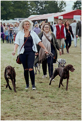 oxted and edenbridge show 2018 (pg tips2) Tags: oxted edenbridgeoxtedshow2018 dog dogs walkies doglovers